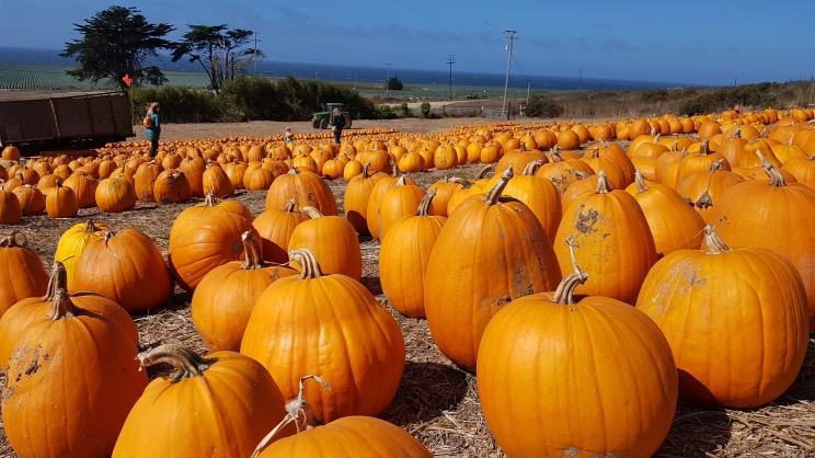 Pumpkin farm sur la Hwy1